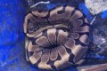 Abandoned python found at Windsor waste disposal centre