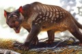 New Clues May Explain Why This Fearsome Marsupial Lion Disappeared From Australia