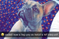 Barking mad! Owner is left shocked after she's ordered to buy a 90p bus ticket for her French Bulldog Chanel - and goes viral with her hilarious post about the pampered pooch
