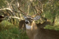 Hunter caught after illegally killing deer blames wife: report