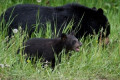 Alaska dad, son sentenced for killing mother bear, 'shrieking' newborn cubs