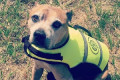 From a beer at the pub with dad to a day eating bacon: Dog owner shares heart-breaking bucket list for her beloved American staffie named Turbo after she's told he has just days to live