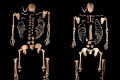 Surprising DNA found in ancient people from southern Europe