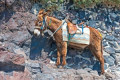 Don't ride the donkeys on Santorini's iconic steps, activists tell travelers