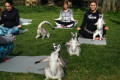 You Can Do Outdoor Yoga With Lemurs at This Hotel in England