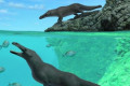 Ancient 4-legged whale walked on land and swam in the sea, scientists say