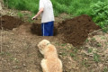 These Viral Photos of a Dog Watching His Owner Dig His Grave Take a Turn for the Better