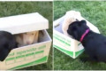 This Joyful Video of a Dog Getting a New Puppy Is Going Mega-Viral