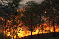 Emergency declared in southern Mexico as forest fires rage