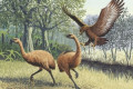 A New Zealand man found 12-million-year-old footprints left by an extinct 500-lb bird