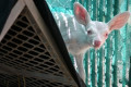 Rare albino fawn rescued by Calif. truck driver from middle of the road