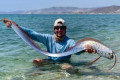 Angler revives exotic sea creature in rare encounter