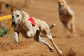 Two companies withdraw greyhound racing sponsorships following horror RTE revelations