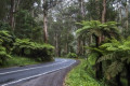 Falling tree kills man and boy in their car on Monbulk Road, Sherbrooke
