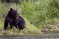 U.S. canoeists besieged by grizzly on Northwest Territories canoe trip rescued