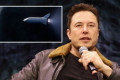 SpaceX can beat NASA and land on moon 'within two years', says Musk