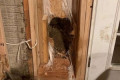 Bear bursts through wall 'like the Kool-Aid Man' to escape home, police say