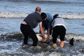 Three friends rescue stranded dolphin from shoreline in Laytown, Co Meath