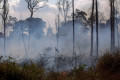 Amazon rainforest fires: How to spot inaccurate photos on social media