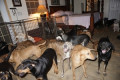 Bahamas woman shelters nearly 100 dogs in her home during Hurricane Dorian