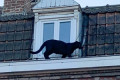 Panther stolen from zoo after rescue from French rooftops