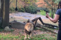 The Bronx Zoo says a woman seen dancing inside its lion enclosure is lucky to be alive