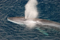 'Distressed and sick' fin whale spotted in River Liffey during Storm Lorenzo has died at Dublin Port