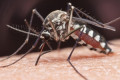 Arizona leads country in West Nile virus deaths: CDC