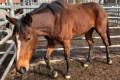 Mass slaughter and abuse of racehorses undermines industry's commitment to animal welfare
