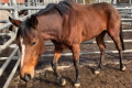 Inquiry launched into the welfare of retired racehorses