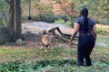Woman who jumped into Bronx Zoo lion exhibit arrested for trespassing
