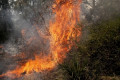 Bushfires 'quite devastating but we'll manage'