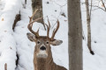 'One in a million' deer captured on camera in Michigan woods
