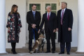'The ultimate fighter': Trump shows off Conan the military dog from Baghdadi raid