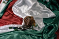Mexico Ambassador to Argentina Recalled Over Alleged Shoplifting