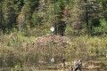 Have you spotted a satellite dish on a beaver dam? Here's why it's happening