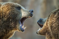 Chinese zoo visitors see worker killed by bears